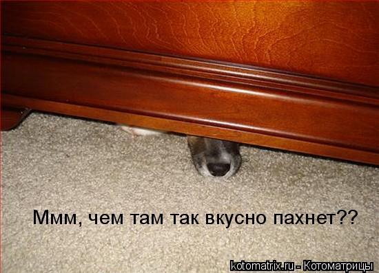 Свежие котоматрицы (60 картинок)