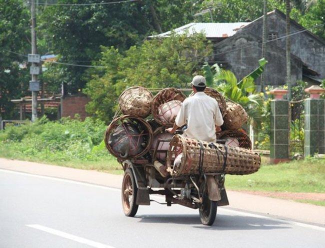 Правила перевозок животных (17 фото)