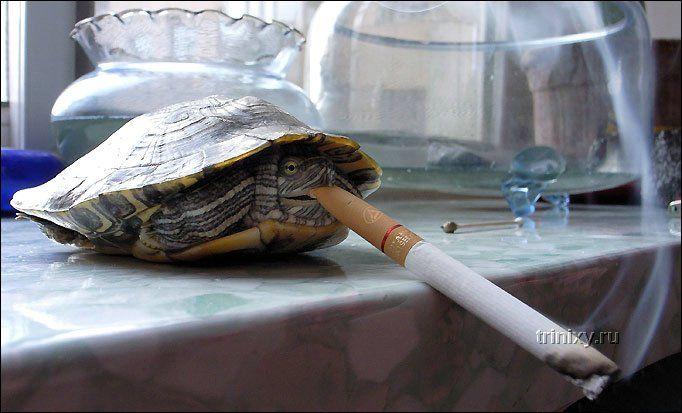 Курение вредно для здоровья! (2 фото)