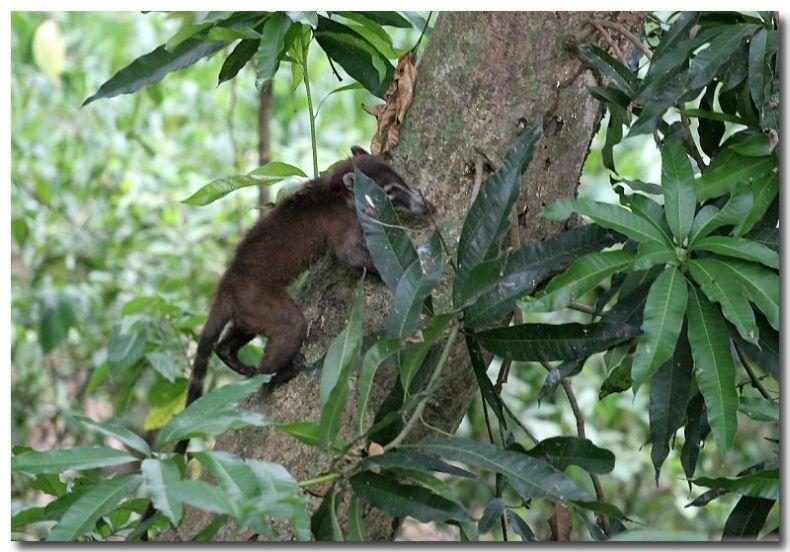 Зверушки, которые обитают в Никарагуа (26 фото)