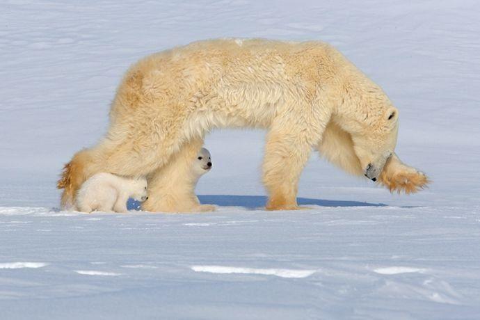 Лучшие фотографии дикой природы 2008 (39 фото)