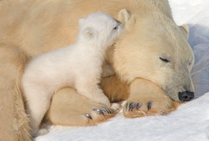Молодая мамаша с потомством (8 фото)