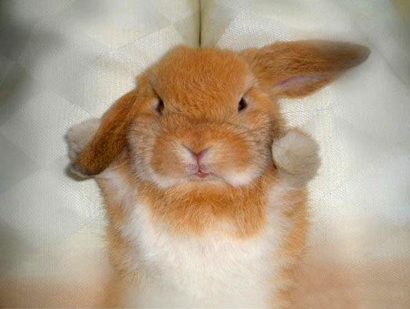 Просто классный кролик ) (4 фото)