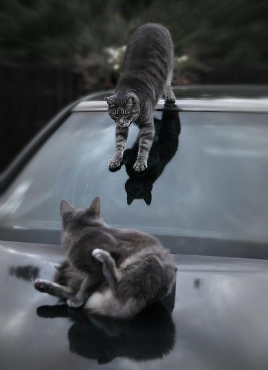 "Подборочка котов (34 фото) "" триникси."
