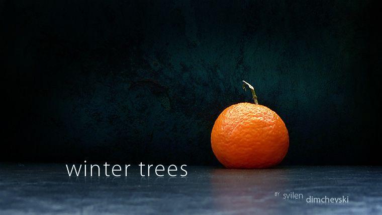 Просто красиво - зимние деревья из апельсина (7 фото)