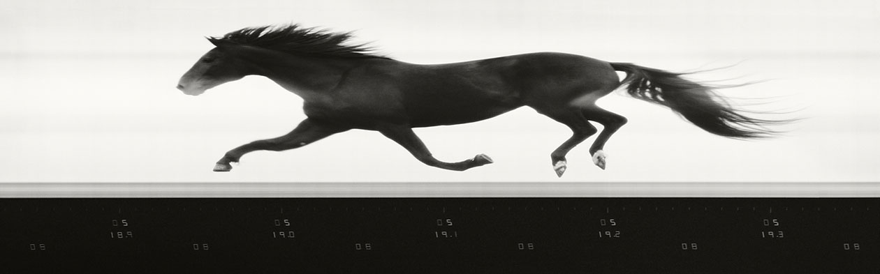 Tim Flach и его фотографии (66 фото)