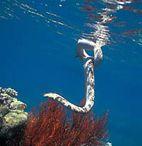 Морские страшилки