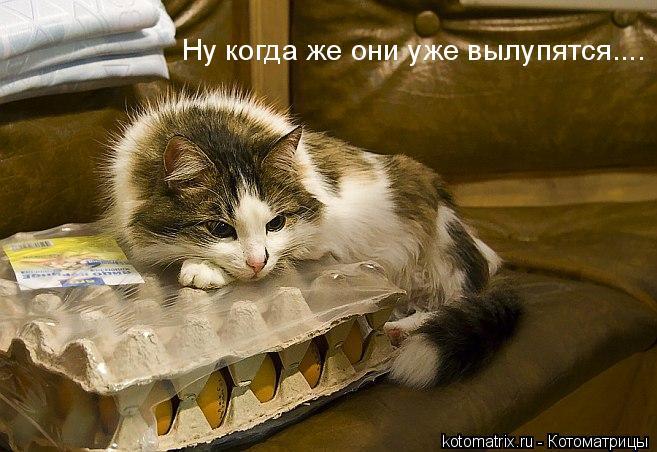 Лучшие котоматрицы за текущую неделю (55 картинок)