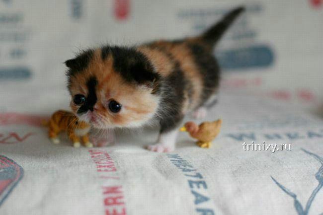 Megapozytywny emo-kociak wyglądający jak osa