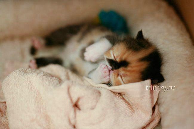 Самый очаровательный котенок в мире (15 фото)