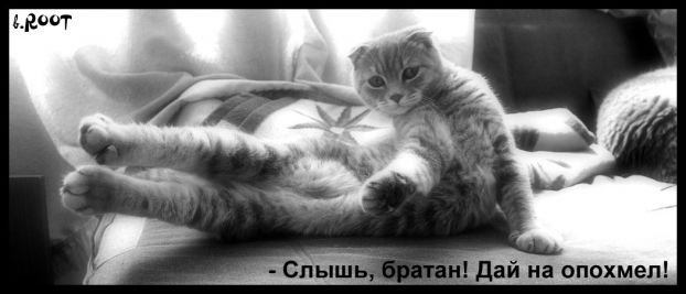 Раритетный пост. Говорящие коты из прошлого (35 картинок)