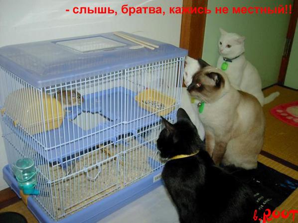 http://de.trinixy.ru/pics3/20080416/kotomatrix_11.jpg