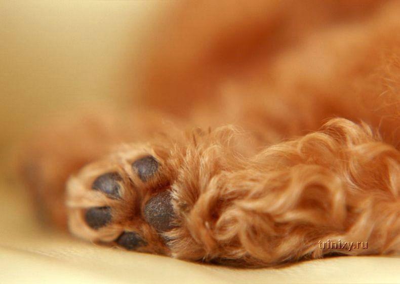 Позитив дня. Красивая фотосессия щенков (99 фото)