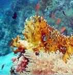 Сокровища Красного моря