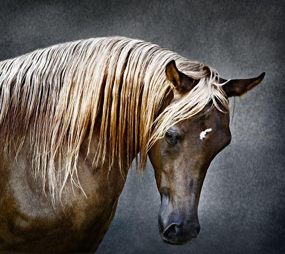 Фотографии-победители конкурса Color Awards 2007 среди профессионалов (76 штук)