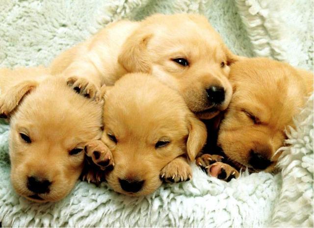 Еще немного щенков (50 фото)