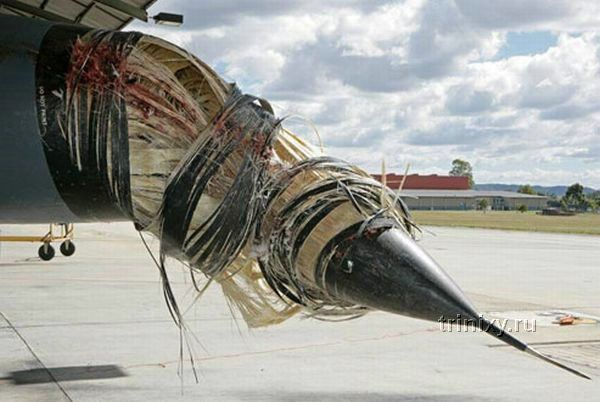 В Австралии истребитель столкнулся с пеликаном (5 фото)