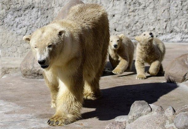 Уроки рыбалки для медвежат