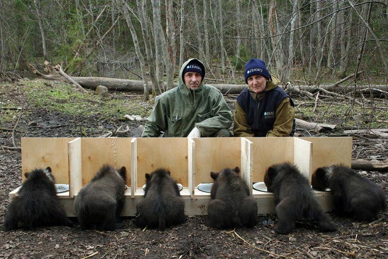 Позитивчик. Детский дом для медведей (13 фото + видео)