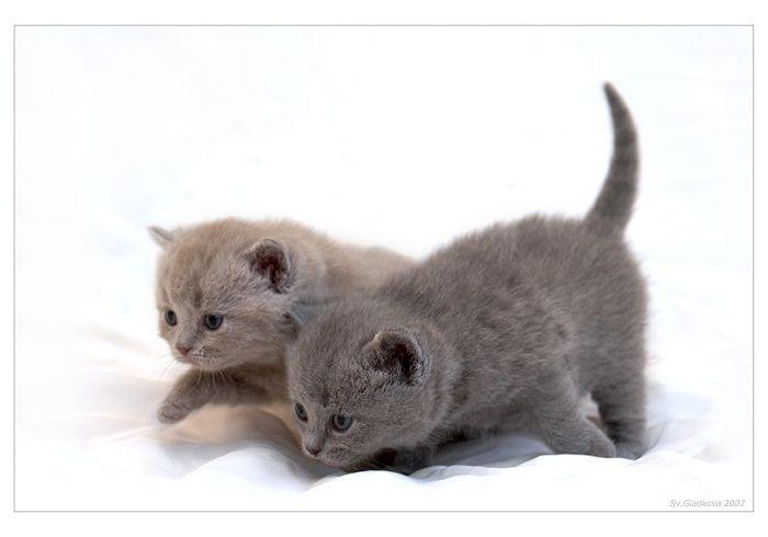 Классные котята (42 фото)