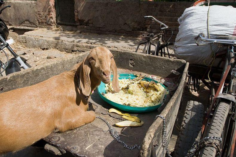В Индии стоит жара (11 фото)