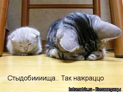 http://ru.trinixy.ru/pics3/20080425/kotomatrix_06.jpg