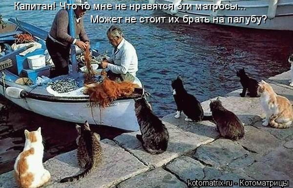 http://trinixy.ru/pics3/20080425/kotomatrix_07.jpg