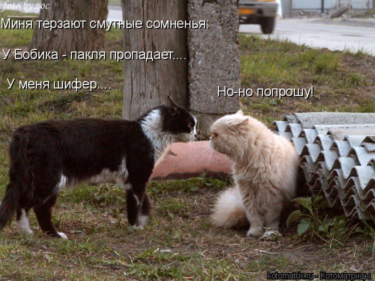 Прикольные фотки котов и кошек.