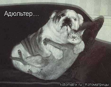 ТОП-75 лучших котоматриц за неделю (75 картинок)