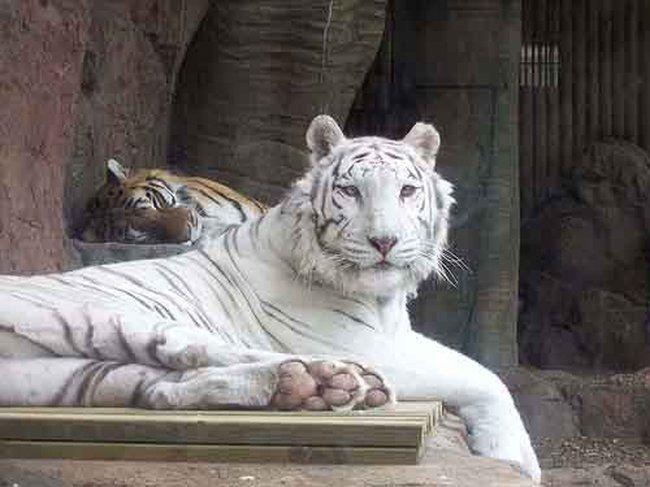 Hayvan Resimleri...