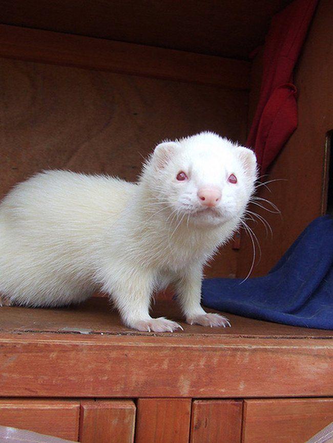 Альбиносы в мире животных (20 фото + видео)