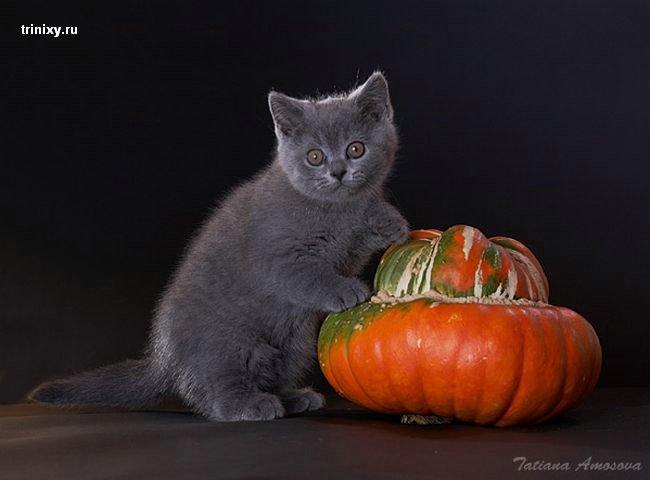 Позитивище дня! Крольчяче-кошачий роман (19 фото)