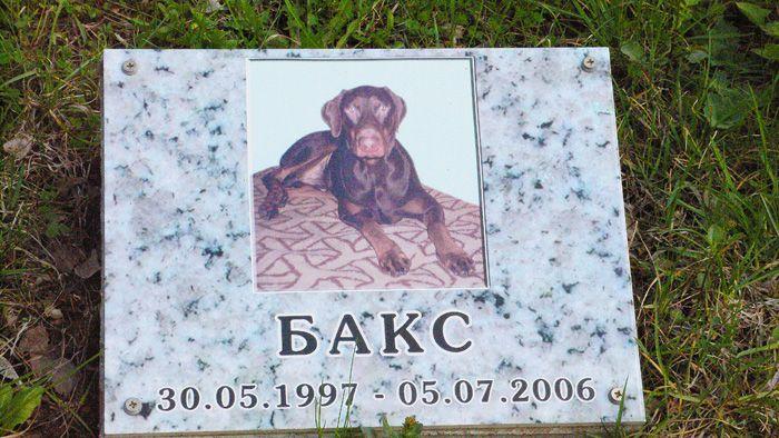 Кладбище домашних животных (15 фото)