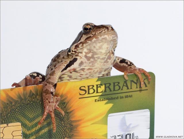 Жаба, которая душит (7 фото)