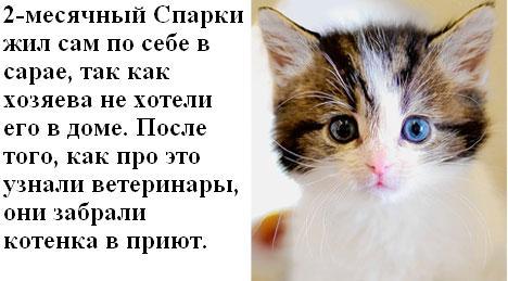 Коты из лондонского приюта (10 котов)