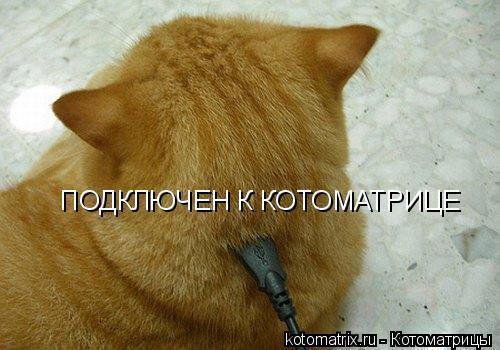 Лучшие котоматрицы за вчера (53 работы)