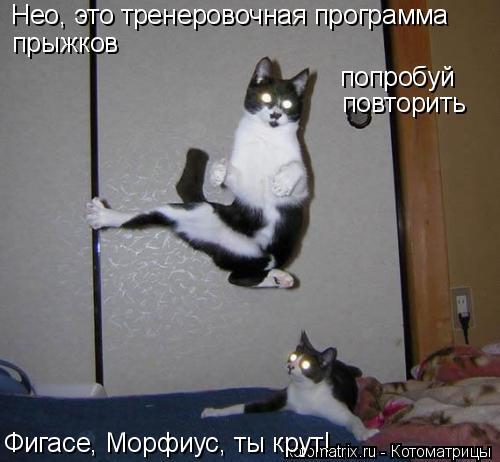 """Предыдущее фото с меткой  """"кошки и коты """"."""