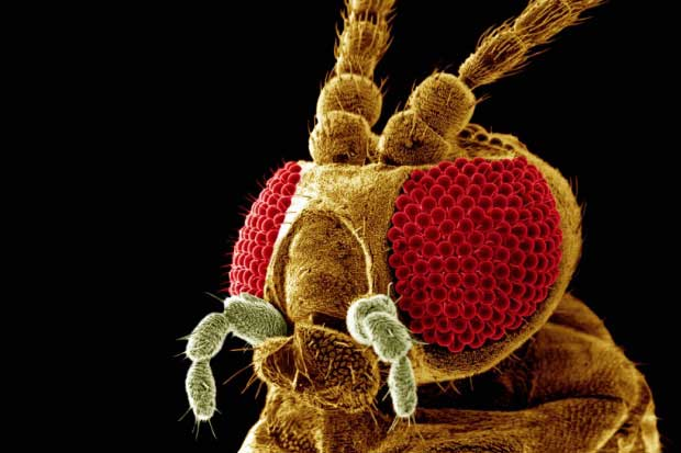 Насекомые под микроскопом (32 фото)