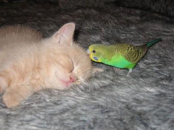 Неразлучные друзья (14 фото)