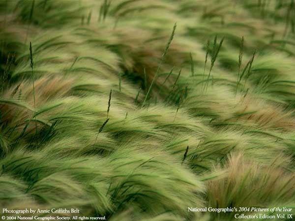 Фотографии природы (14 фото)
