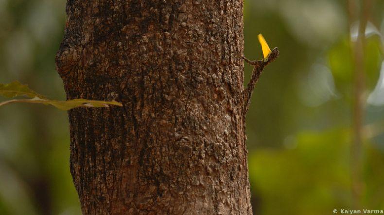 Найдите ящерицу (3 фото)