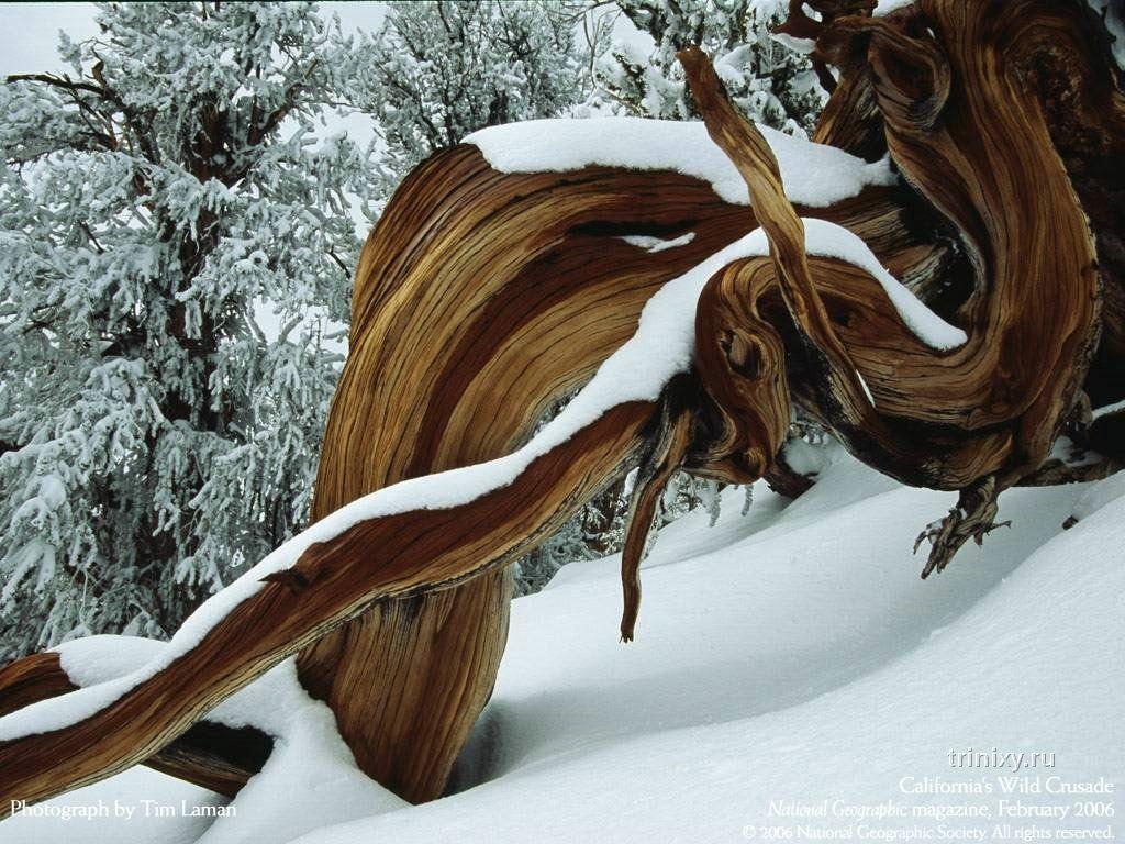 Красота природы от NG (13 фото)