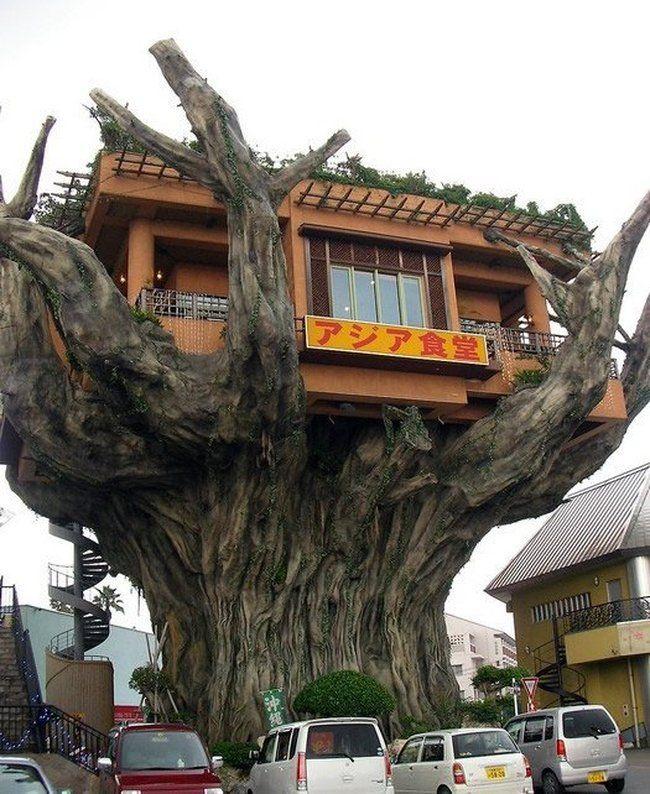 Ресторан на дереве (6 фото)