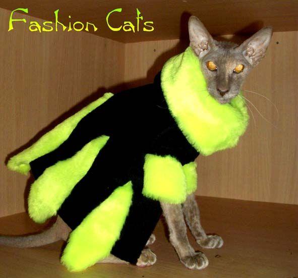 Одетые коты (32 фото)