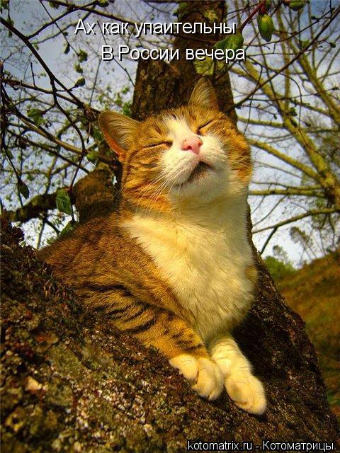 Подборка свежих котоматриц (53 фото)