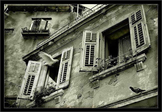 Шедевры фотоискусства (35 фото)
