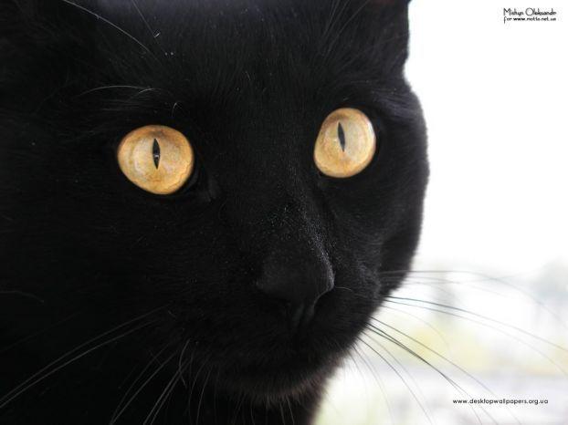 Позитив на понедельник. Черные и белые животные (45 фото)