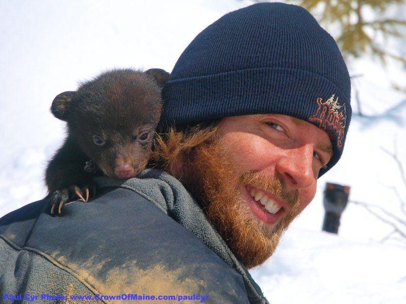 Как зоологи потревожили мишкин сон (26 фото)