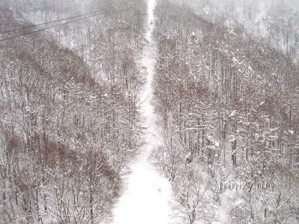 Монстро деревья в Японии (13 фото)
