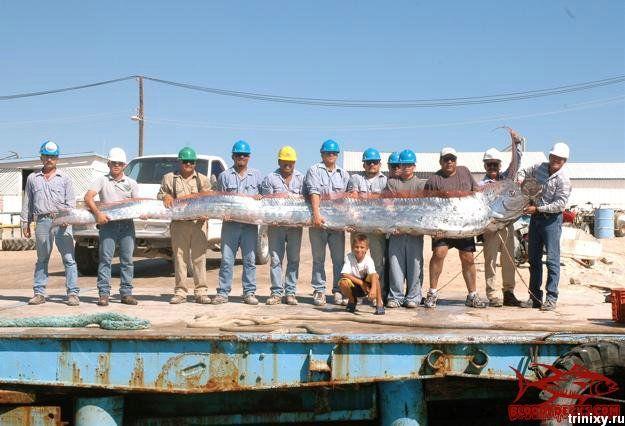 Улов настоящих рыбаков (7 фото)
